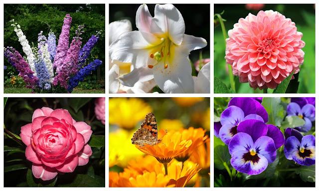 Flores Espuela de caballero, lirio, dalia, camelia, caléndula y violeta