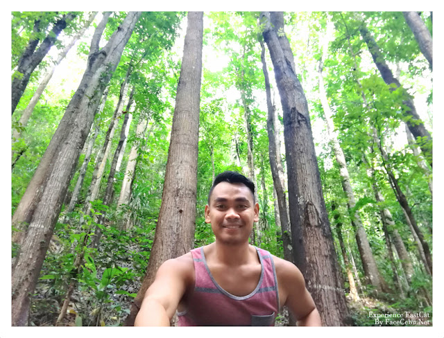 Man-made Forest of Bohol