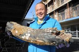 トウヨウゾウ?古代ゾウの牙の化石かも?