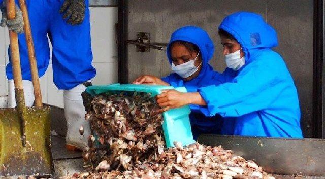 Bahan Baku Makanan Tambahan untuk Ikan