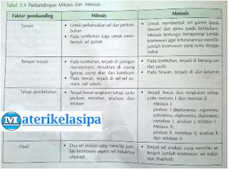 Tabel perbedaan mitosis dan meiosis berdasarkan tahap pembelahan, tujuan, tempat terjadi dan hasilnya