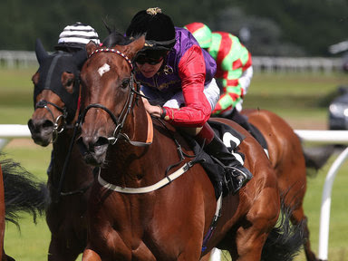 racing tips, betting tips, betting odds,