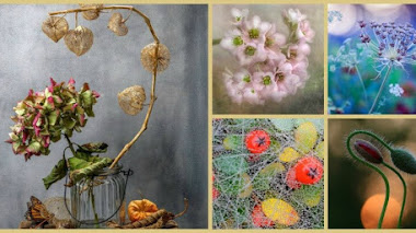 La Belleza de las Plantas. Fotos premiadas en IGPOTY N.10 The Beauty of Plants