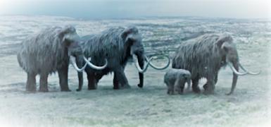 Mammoth Woolly Jenis Hewan Besar yang Menakutkan Hidup di Zaman Pra-sejarah