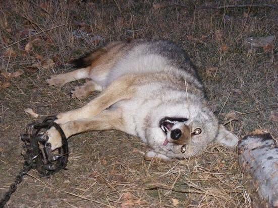 canada goose and dog fur