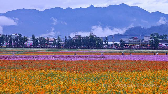 taiwan flower
