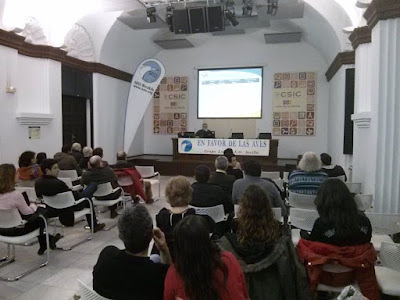 """Conferencia 1 de Marzo 2016: """"El Aguilucho cenizo. Retos para Conservar un Ave del secano"""". Grupo Local Seo-Sevilla"""