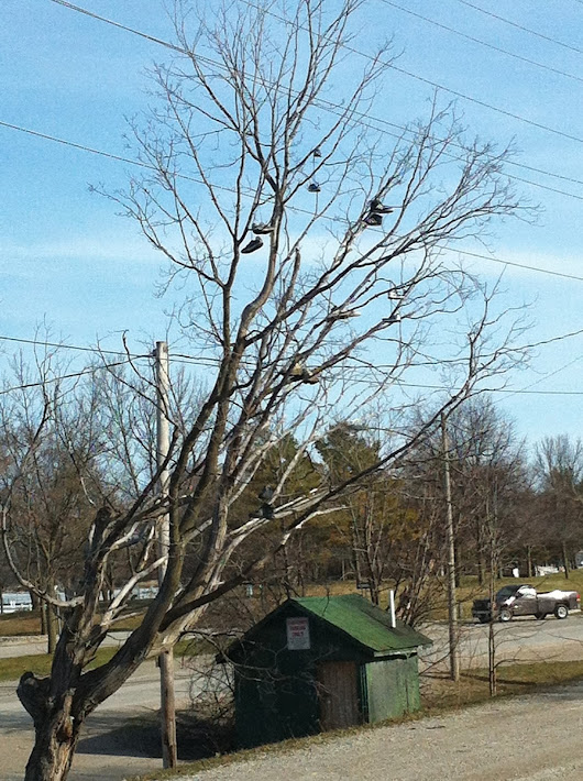 Everything Susan: Orillia Shoe Tree Wordless Wednesday