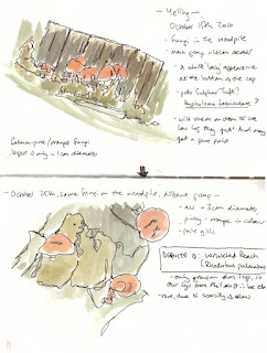 logpile fungi field sketches, 15th and 25th October 2016