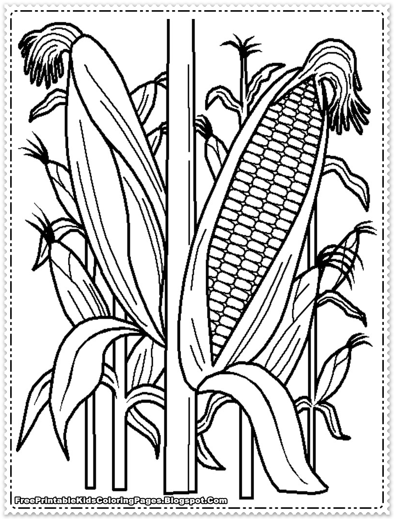 Corn Coloring Pages Cornfield Printable Kids
