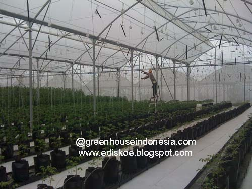 Hidroponik To Town Let S Go Hydroponics Indonesia Greenhouse