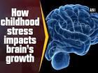 How childhood stress impacts brain development