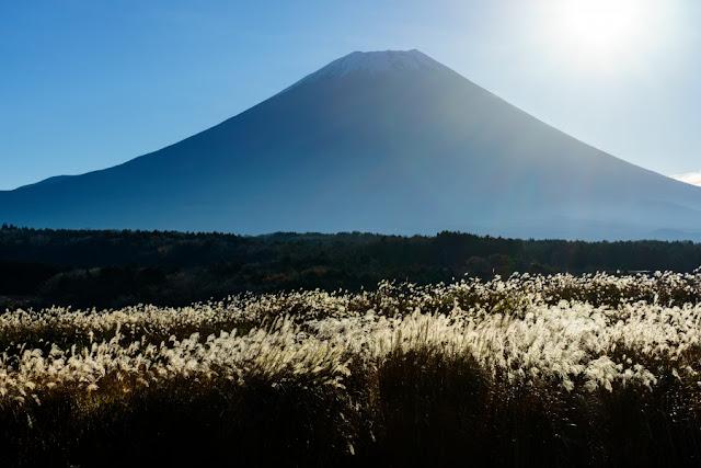ススキと富士山~朝霧高原(静岡)