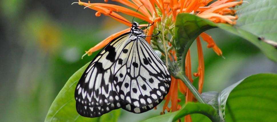 Frederik Meijer Gardens U0026 Sculpture Park Butterflies Are Blooming Exhibit U0026  Giveaway!