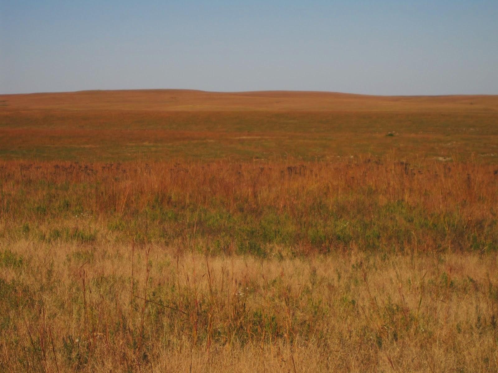 http://www.taylorlenz.com/2010/10/visiting-tallgrass-prairie-national.html