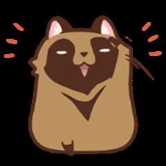 Fluffy Raccoon Dog