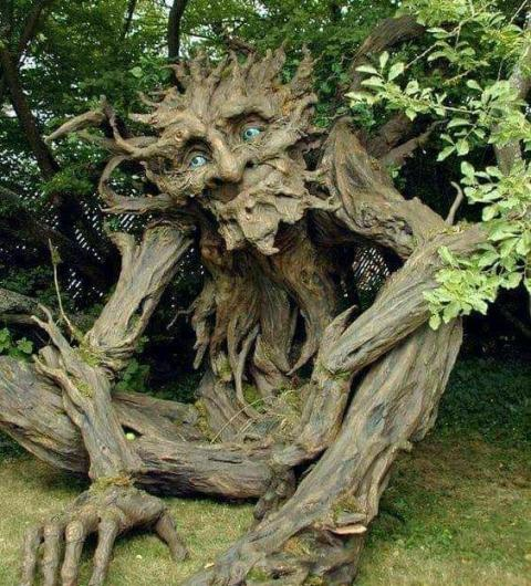 Top 4 Weird Trees in World