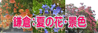 鎌倉:夏の花・景色