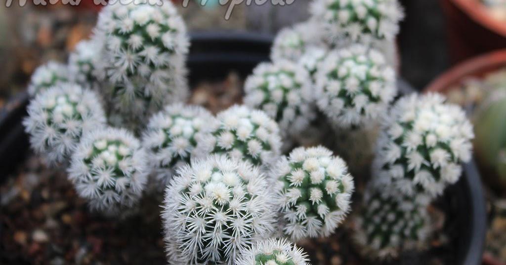Naturaleza tropical conoce todo sobre el cactus for Informacion sobre el cactus