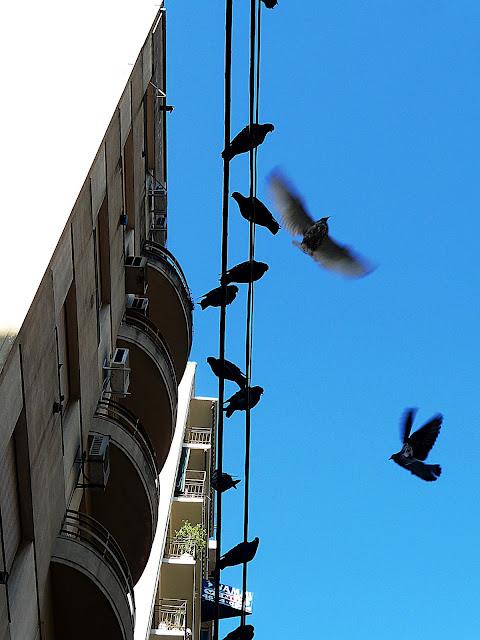 Palomas volando y otras sobre cables de telefónos.