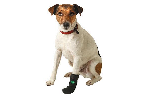 como curar una herida abierta en la pata de un perro