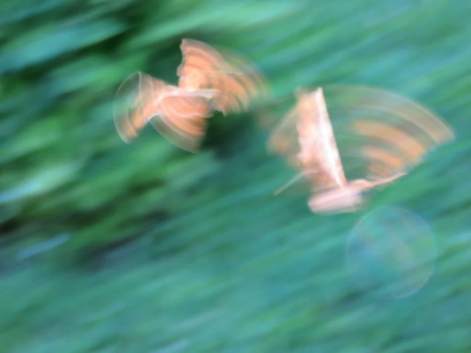 Bêtes à plumes, à pwal, de tout bord, mère nature qui nous gâte... Diapositive24