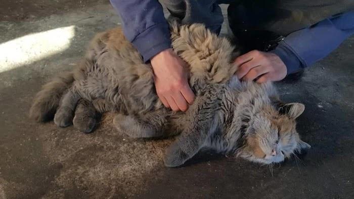 Meet Dirt, The Adorable Nevada Railway Cat That Always Looks Dirty