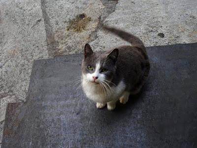 Ένα αξιαγάπητο μουτράκι. Μια αφιέρωση στις γάτες που γυρίζουν στο λαγούμι του Κούνελου