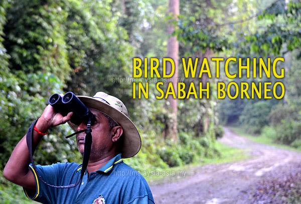 Sabah Birding Top Destination