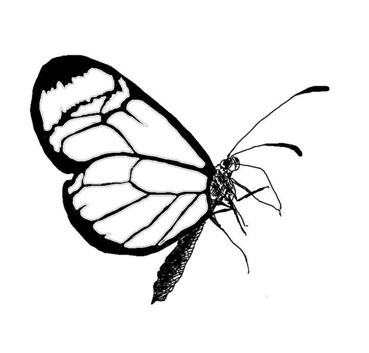 The Kitchen Table Crafter: Free Digi Sketch: Lacewing ...