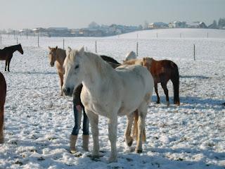 Filius, mein erstes Pferd