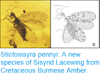 http://sciencythoughts.blogspot.com/2018/03/stictosisyra-pennyi-new-species-of.html