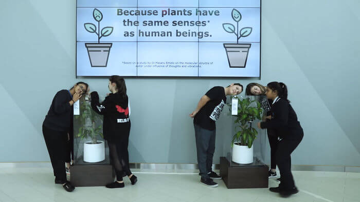 Students Bullied A Plant As Part Of An IKEA Experiment, And The Result Is Unbelievable!