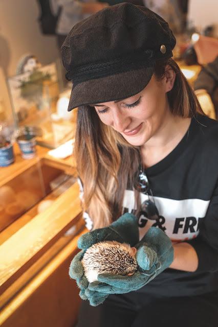 Alicia Mara at Hedgehog Cafe in Tokyo