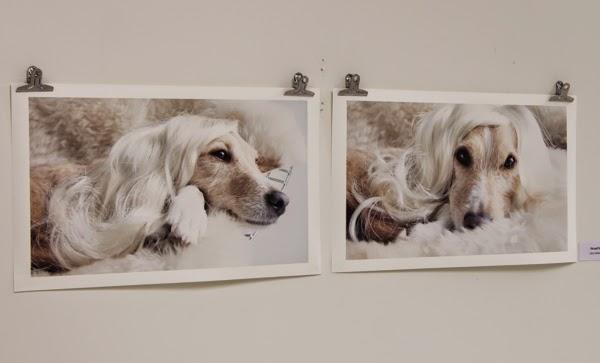 blogi 40+ nelkytplus koirakuvaus koiravalokuvaus koirakuvaaja valokuvaaja
