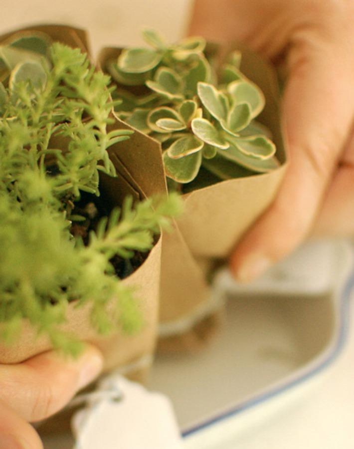 7 Detalles handmade con suculentas para invitados de boda