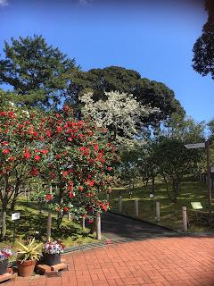 大島公園椿園風景