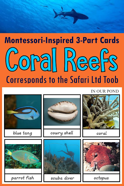 Montessori-Inspired Coral Reef Toob 3-Part Cards // In Our Pond