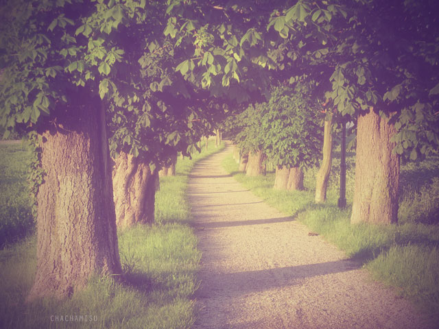 Chachamisu, photography, landscape, Europe, summer, nature, alley, trees, sunrays, wandering, Austria