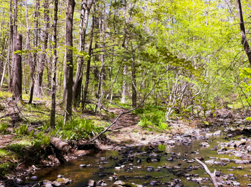 North Slope Trail - Guilford CT