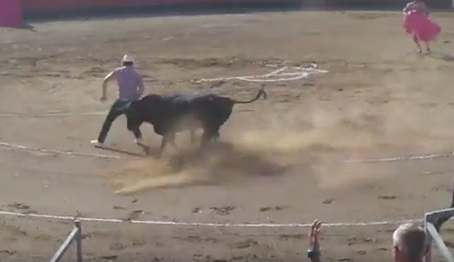Toro ataca a activistas que habían entrado al ruedo para defenderlo (VIDEO)