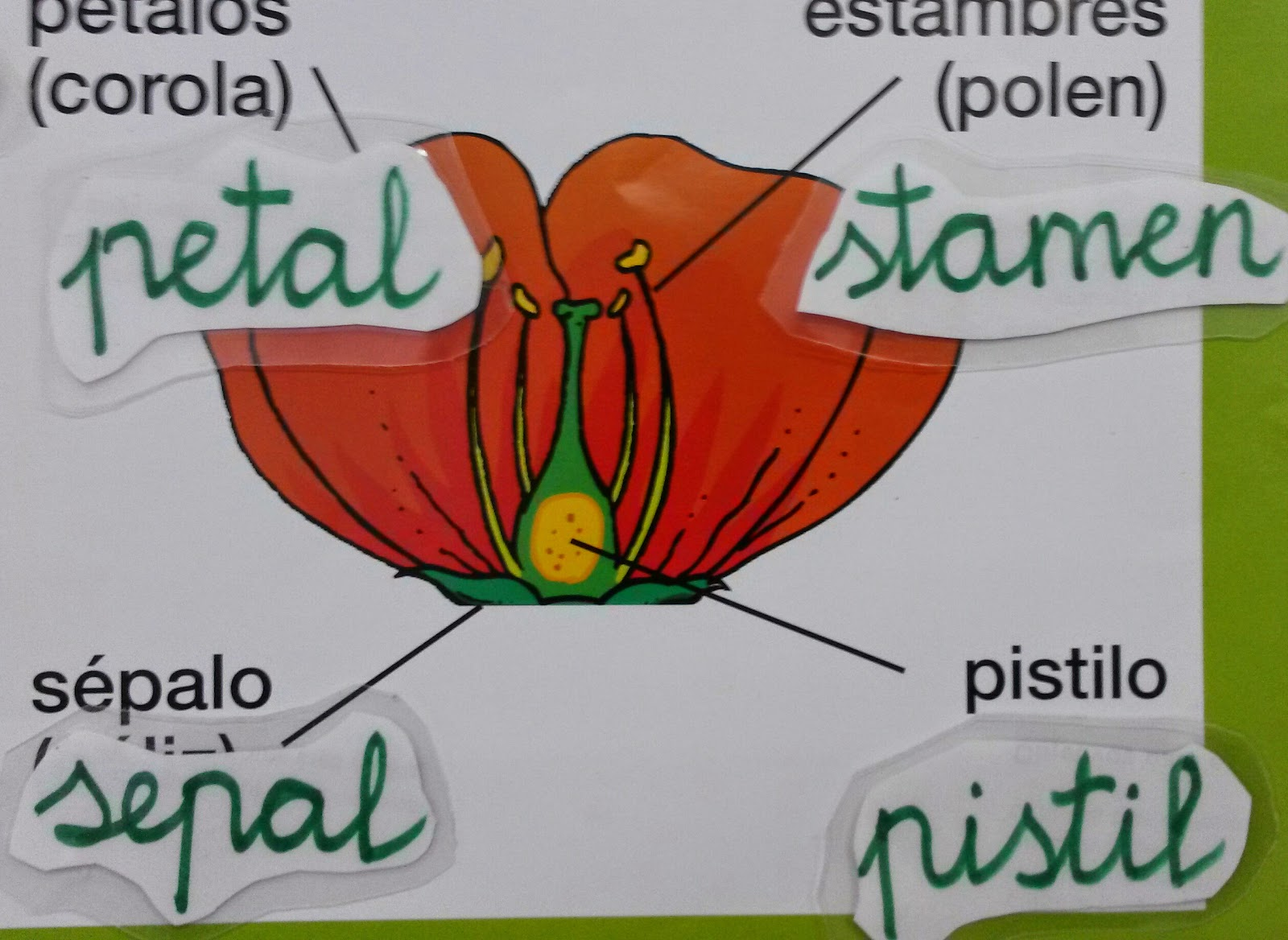 Explanada Kids Parts Of A Flower