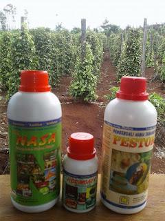 pupuk tanaman lada, agar tanaman lada subur