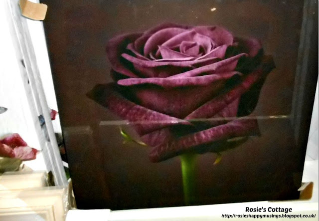 Stunning Purple Rose Canvas