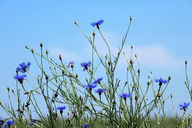 hoa dại đẹp nhất 4