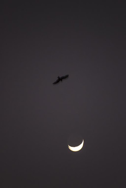 skywatch, moon, kite, bandra east, mumbai, india,