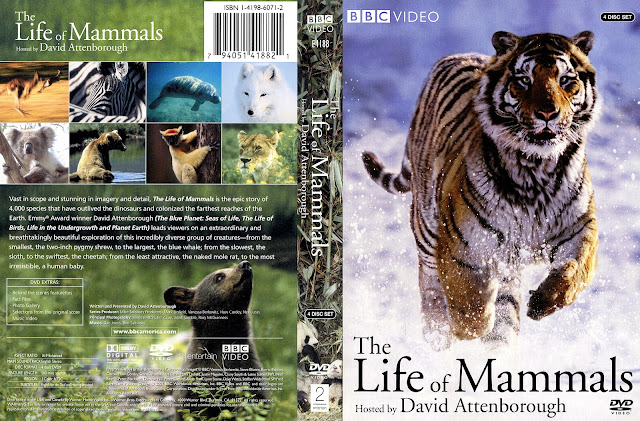 Life of Mammals (scan) DVD Cover
