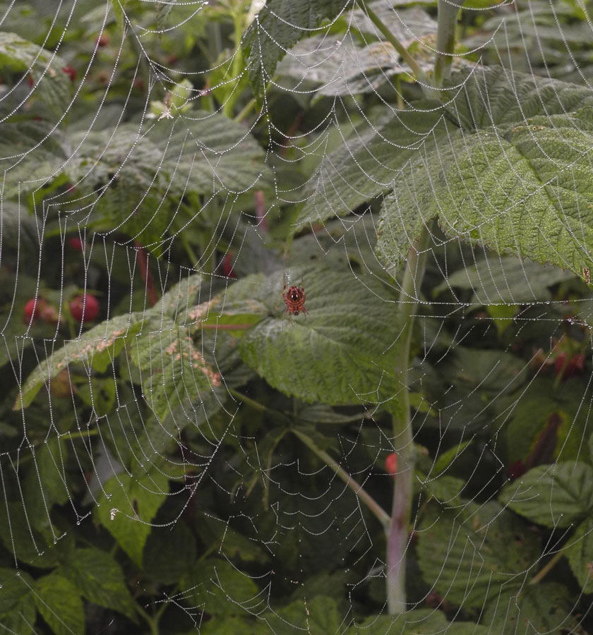 Studio And Garden The Webs They Weave