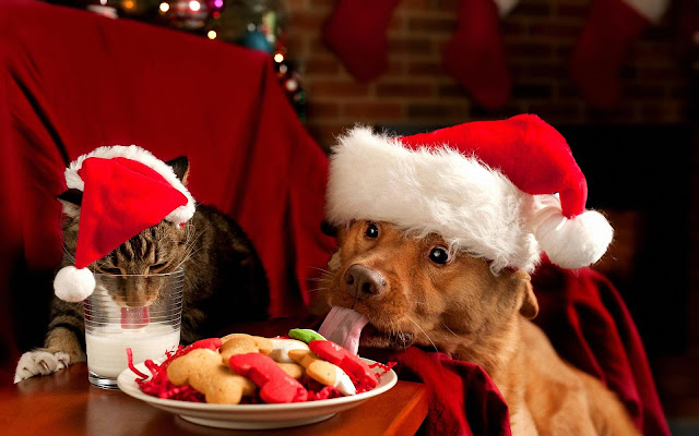 Keeping Pets Safe and Happy During the Holidays