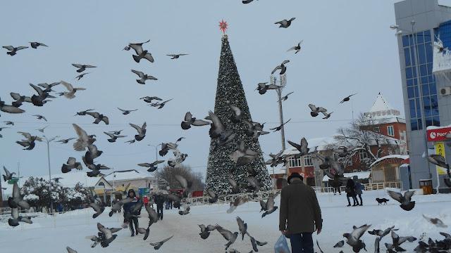 Новогодняя ёлка и голуби